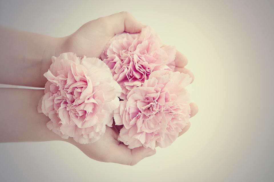 blumen nelken rosa kostenloses foto auf pixabay. Black Bedroom Furniture Sets. Home Design Ideas