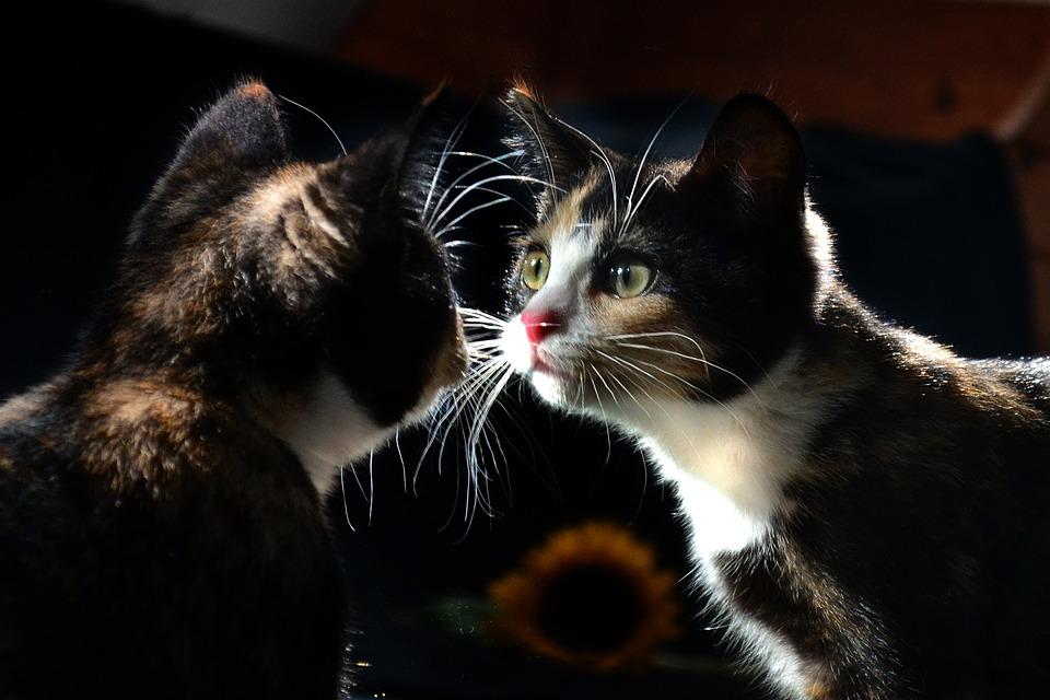 「kitty tiger mirror」的圖片搜尋結果