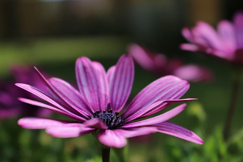 free photo flower, natural, flowers, summer  free image on, Beautiful flower