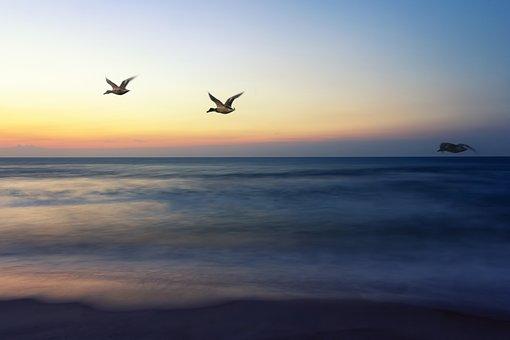 Sunrise Flight, Going Home, Birds, Sky