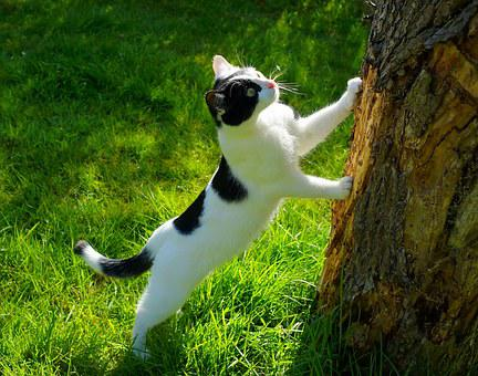 A cat seeking something on a tree as part of 22 reasons why people read blogs