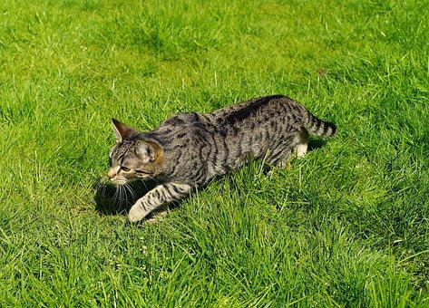 Katze, Hauskatze, Garten, Junge Katze