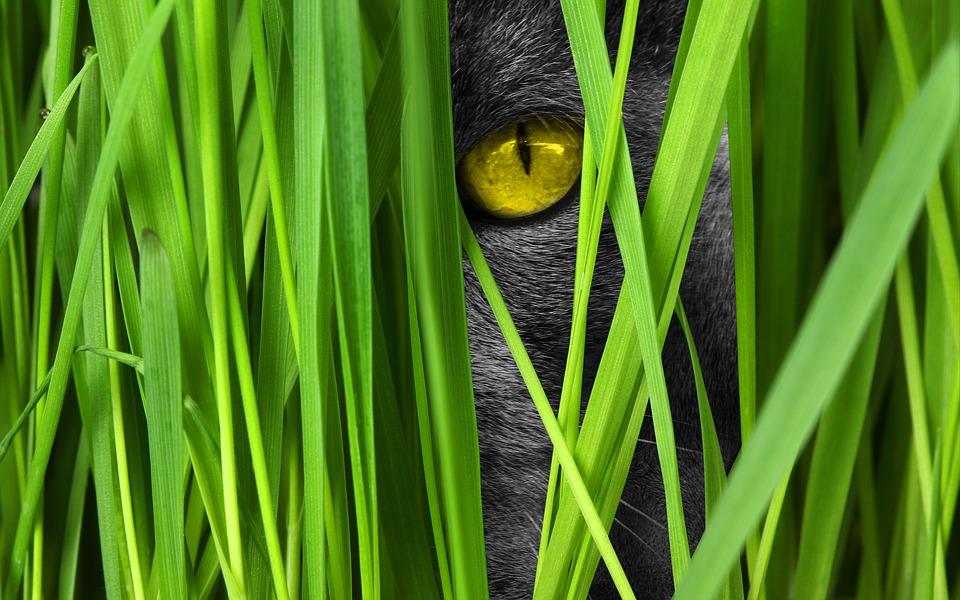 Čierna džungľa mačička