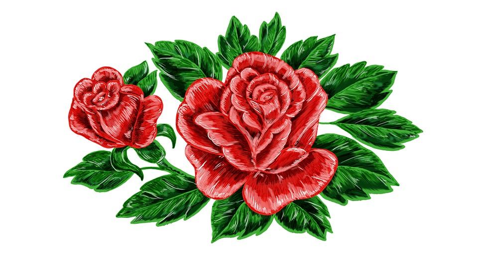 Rose Flower Nature Free Image On Pixabay