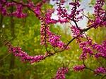 tree, flowers