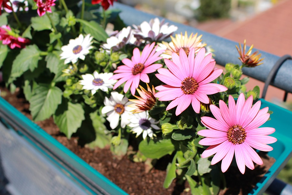 kostenloses foto: blumen, frühling, dahlie - kostenloses bild auf, Gartengerate ideen