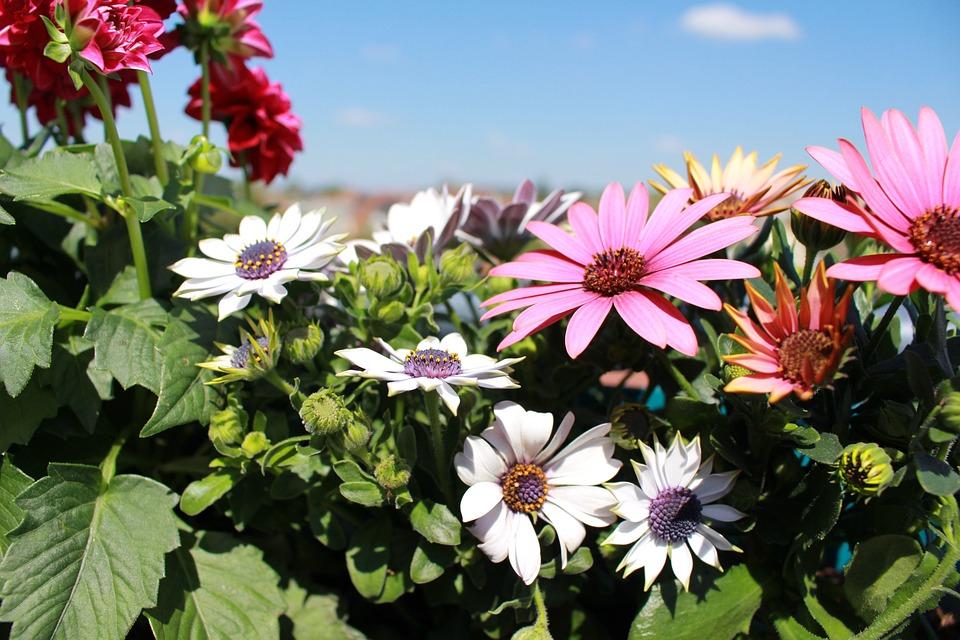 Blumen Fruhling Dahlie Rosa Kostenloses Foto Auf Pixabay