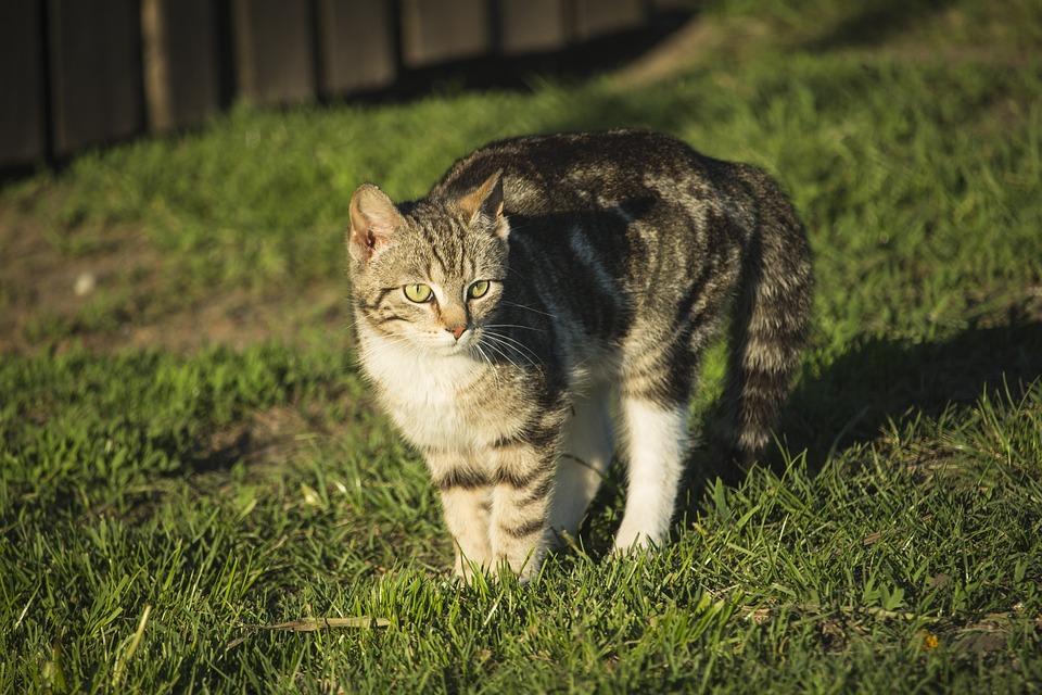 Картинки простой кошки
