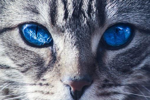 Cats, Eyes, Wild, Animal, Kitten