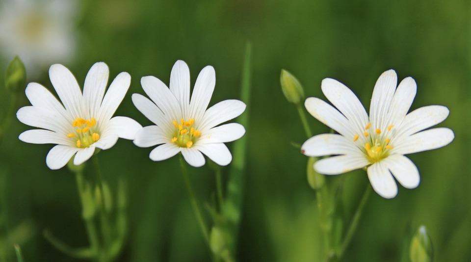 Blumen Weiß Gelb · Kostenloses Foto auf Pixabay