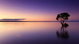Sunset, Tree, Water, Silhouette