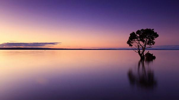 Sunset, Tree, Water, Silhouette, Nature