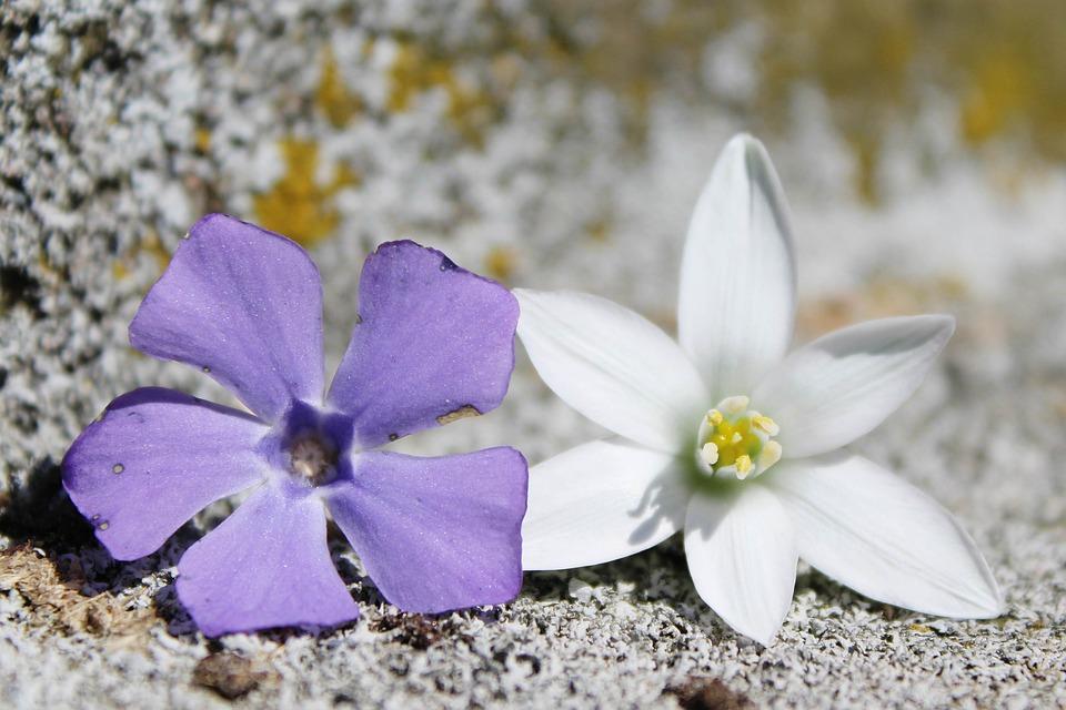 Blüten Blumen Lila · Kostenloses Foto auf Pixabay