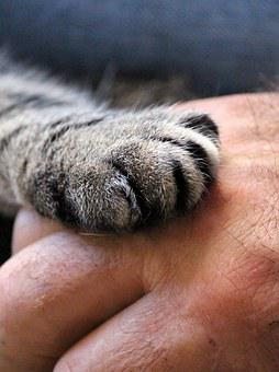 Cat'S Paw, Hand, Cat, Human, Trust