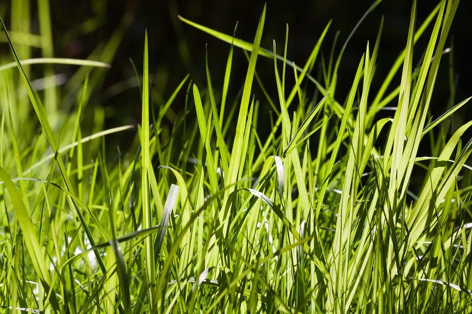 трава картинки большая район