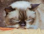 cat, grumpy