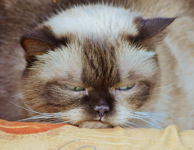 Losing A Pet Cat Kitty