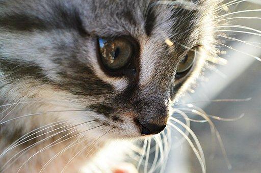 Katze, Kätzchen, Tiere, Person, Augen