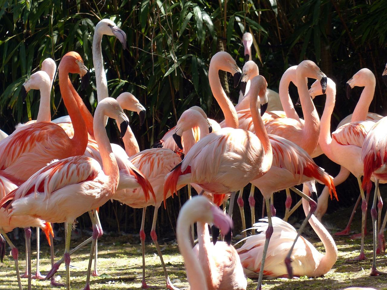 розовый фламинго фотографии развитии