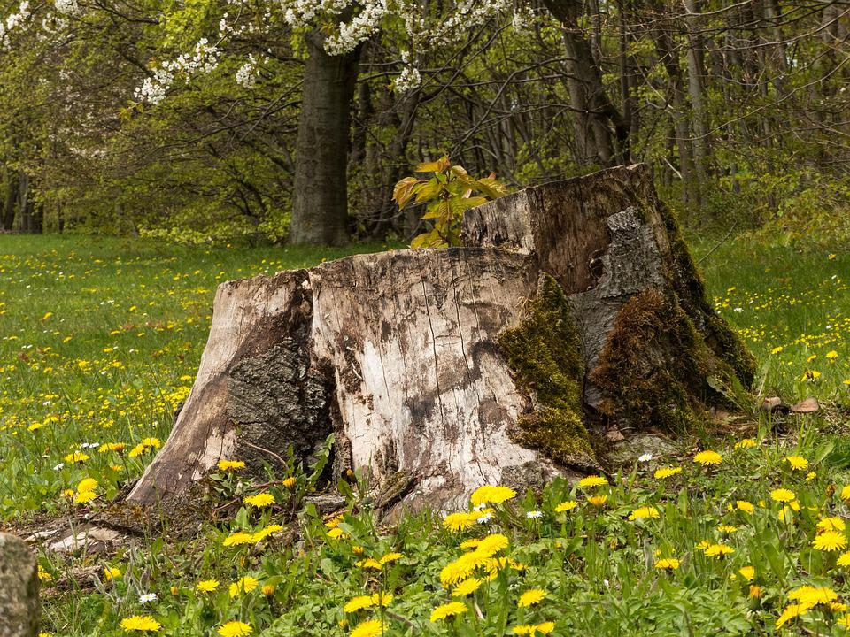 Image result for stump in a meadow