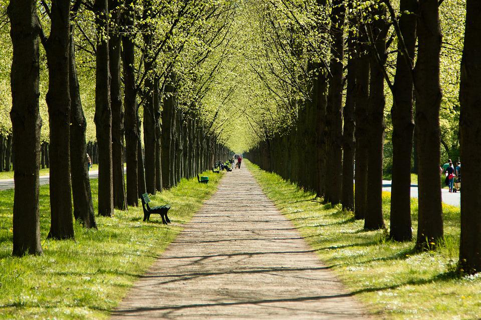 Hannover, Niedersachsen, Herrenhauses, Alles, Garten