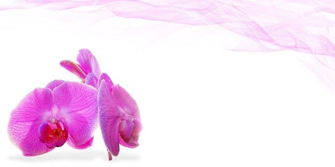 4 000 Gambar Bunga Anggrek Anggrek Gratis Pixabay