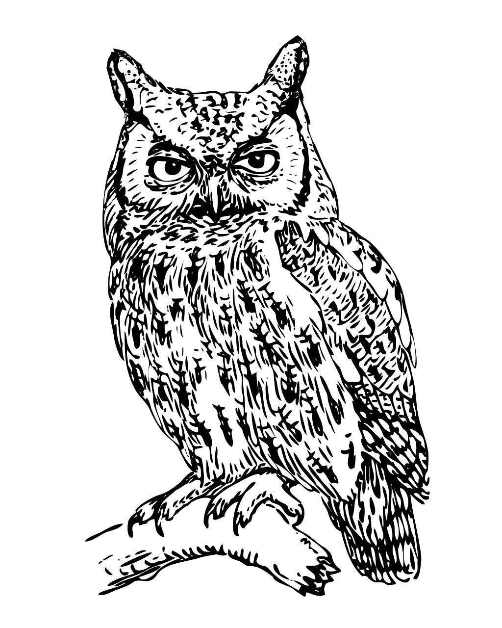 Owl black and white clipart