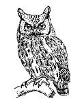 owl, screech owl, art