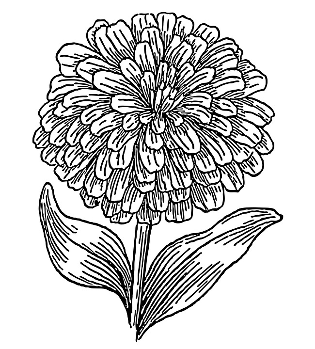 Free illustration Zinnia Flower