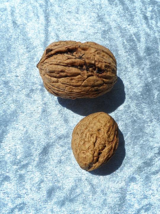 Walnut, Large, Huge, Eat, Brain, Brain Food, Delicious