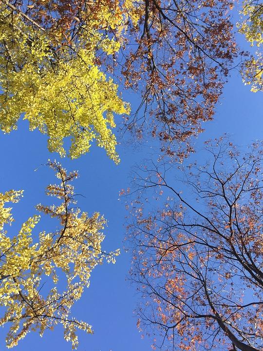 Sky Nature Blue - Free photo on Pixabay