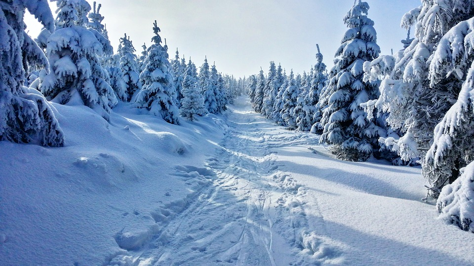 Zimní, Hory, Sníh, Pohled, Vánoční Strom