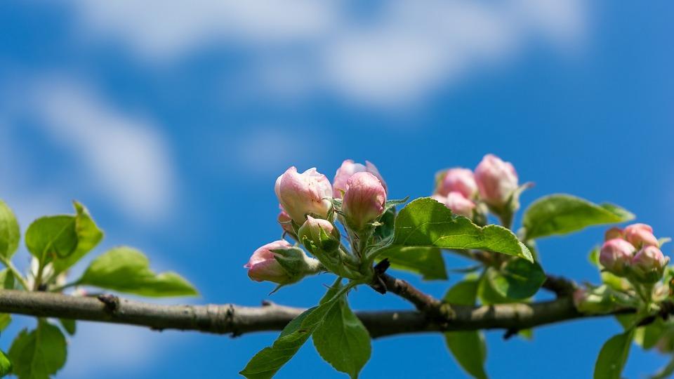 ciel arbre paysage point de vue log t fleurs - Arbre Ciel