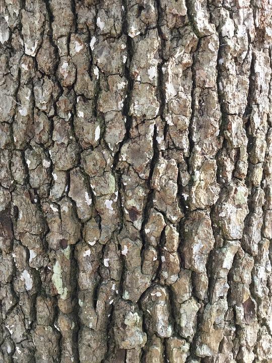 tree bark rough background  u00b7 free photo on pixabay sun vector art sun vector free