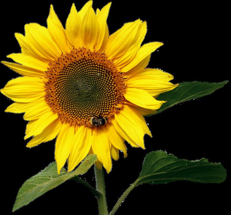 Summer Flower Images