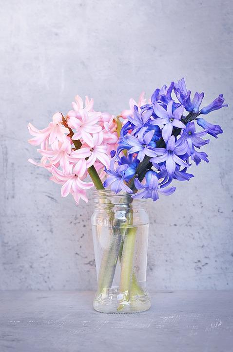 Hyacinth pink blue free photo on pixabay hyacinth pink blue flower pink flower blue flower mightylinksfo