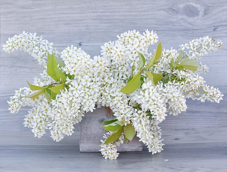 Lilac images pixabay download free pictures lilac flowers white flowering twig lilac b mightylinksfo
