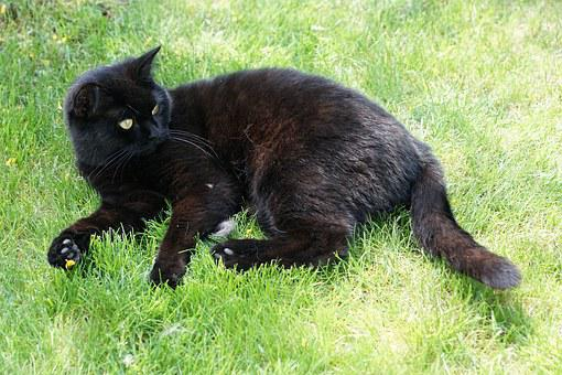 Cat, Black, Animal, Grass, Concerns