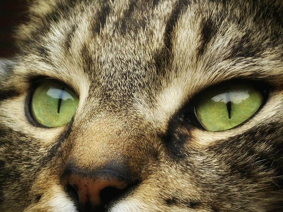 photo gratuite chat chats animal de compagnie image gratuite sur pixabay 1387583. Black Bedroom Furniture Sets. Home Design Ideas