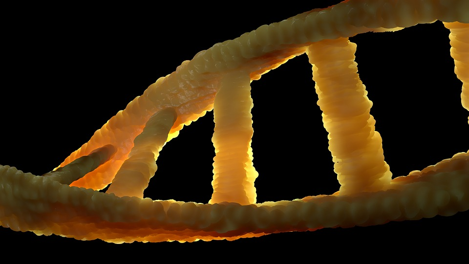 Most cancerous mutations are random DNA errors