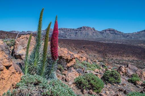 Tenerife, Teide National Park, Volcano