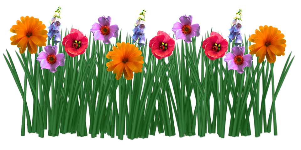 Spring Flowers Grass Free Image On Pixabay
