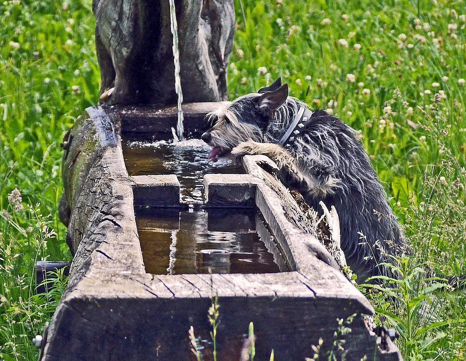 Fuente, Sed, Terrier, Chorro De Agua, Registro