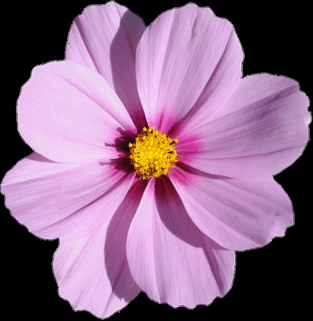 цветок фиолетовый вертикальной границы акварель
