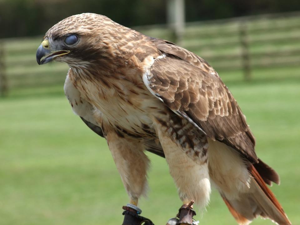 Velké kořist velké ptáky
