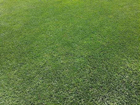 Rush, Ornamental Grass, Green