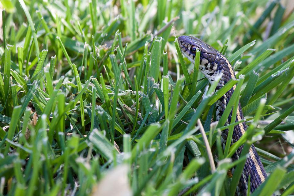 Snake In The Grass Garden · Free photo on Pixabay