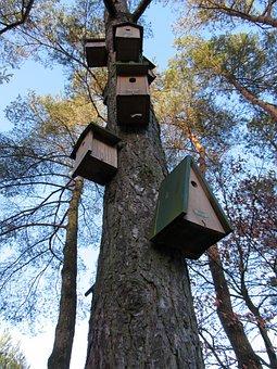 บ้านนก, ต้นไม้, ไม้, บ้าน, ที่ทำจากไม้