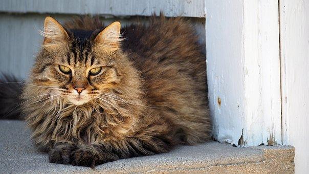 Cat, Portrait, Kitten, Cute, Animal