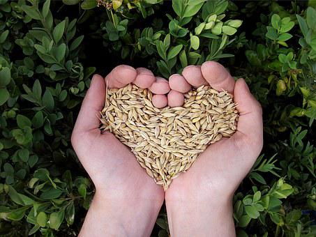 Heart, Hands, Food, Grains, Cereals